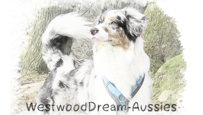 WestwoodDreamAussies